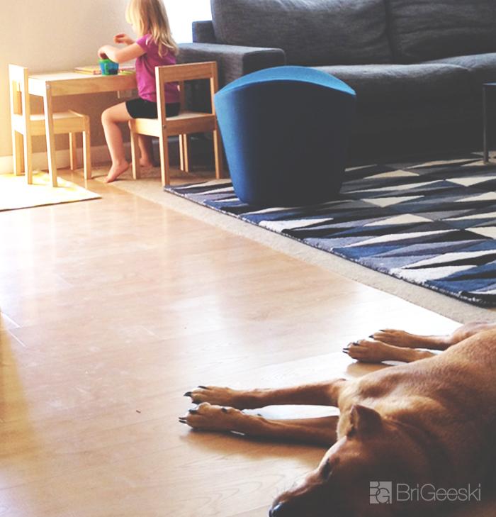 Dog sleeping and Kiddo playing